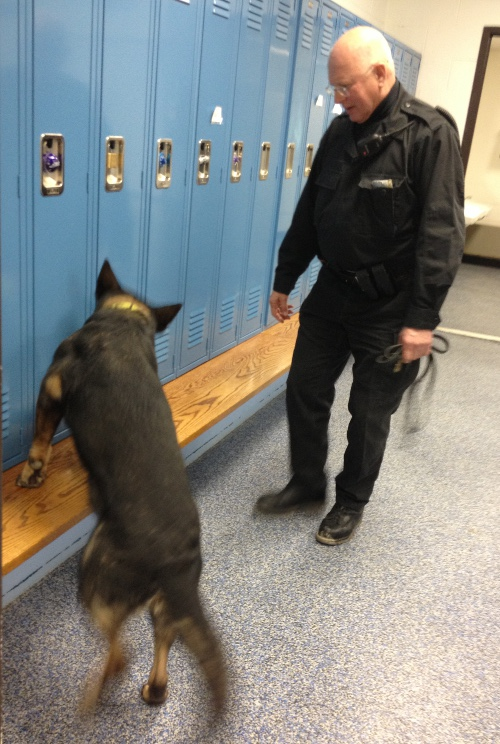 A K-9 team conducts a training exercise at Colchester High School