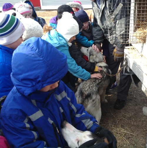 Second graders at Porters Point School interact with sled dogs